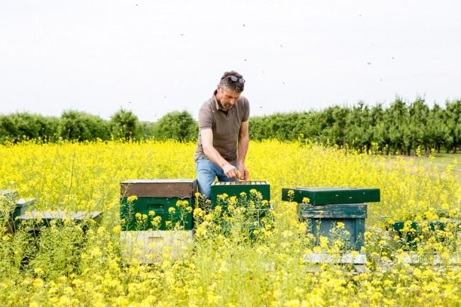 honey, bees, bijen, jacobsfruit, fotografie, photografie, laura, noppe